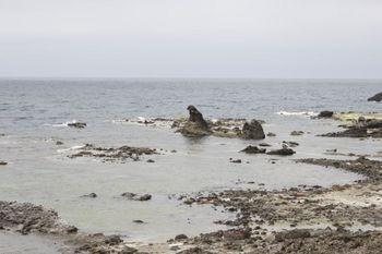 ゴジラ岩広域.jpg