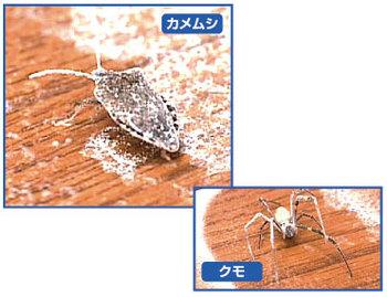凍殺point1.jpg