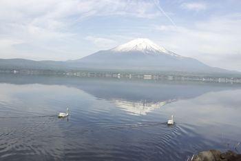 逆さま富士白鳥4.jpg