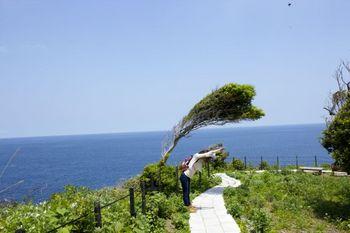 風に吹かれた面白い木1.jpg